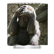 Baby Gorilla1 Shower Curtain