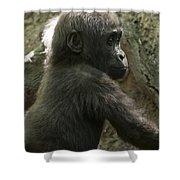 Baby Gorilla2 Shower Curtain