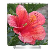 Baby Grasshopper On Hibiscus Flower Shower Curtain