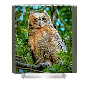 Baby Great Horned Owl Shower Curtain