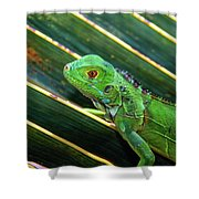 Baby Green Iguana Shower Curtain
