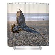 Baby Gull At Dusk Shower Curtain