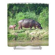Baby Hippo 1 Shower Curtain