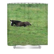 Baby Horse Shower Curtain