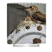 Baby Hummers 2 Shower Curtain