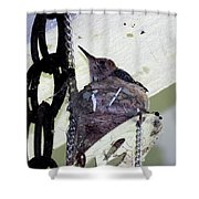 Baby Hummers 5 Shower Curtain