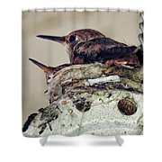 Baby Hummers Shower Curtain
