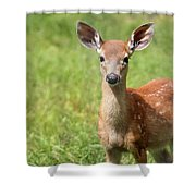 Baby In The Tall Grass Shower Curtain
