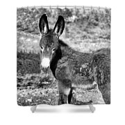 Baby Jenny 2 Shower Curtain