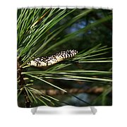Baby King Snake Shower Curtain