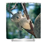 Baby Koala Bear Shower Curtain by Himani - Printscapes