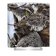 Baby Koala V2 Shower Curtain