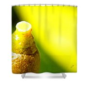 Baby Lemon On Tree Shower Curtain by Ben and Raisa Gertsberg