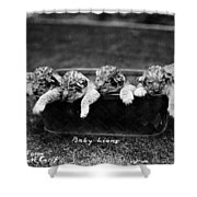 Baby Lions, C1900 Shower Curtain