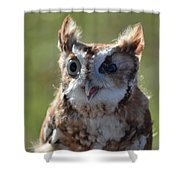Cute Screetch Owl Shower Curtain