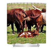 Baby Longhorn Shower Curtain