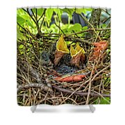 Baby Mockingbirds Shower Curtain