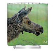 Baby Moose With Dew Shower Curtain