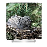 Baby Morning Dove Shower Curtain