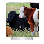 Baby Of The Herd Shower Curtain