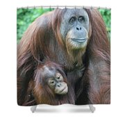 Baby Orangutan Clinging To His Mother Shower Curtain