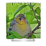 Baby Oriole Shower Curtain