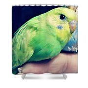 Baby Parrakeets 2 Shower Curtain
