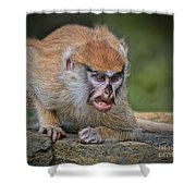 Baby Patas Monkey On Guard  Shower Curtain