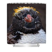 Baby Penguin Shower Curtain