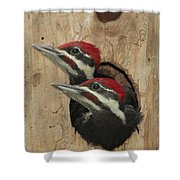 Baby Pileated Woodpeckers Peer Shower Curtain