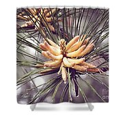 Baby Pine Cones Shower Curtain