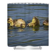 Baby Pool Shower Curtain