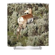 Baby Pronghorn Feeding Shower Curtain