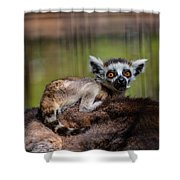 Baby Ring-tailed Lemur Shower Curtain