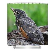 Baby Robin Shower Curtain