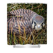 Baby Sage Grouse Shower Curtain