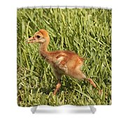 Baby Sandhill Crane Shower Curtain