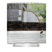 Baby Seagull Running In The Rain Shower Curtain