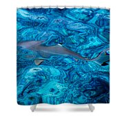 Baby Shark In The Turquoise Water. Production By Nature Shower Curtain