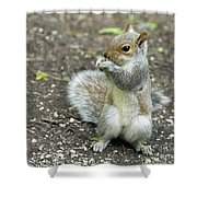 Baby Squirrel Shower Curtain