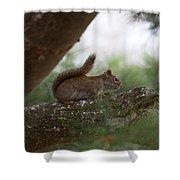 Baby Squirrel Shower Curtain