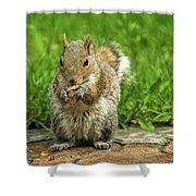 Baby Squirrel's First Peanut Shower Curtain