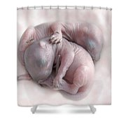 Baby Squirrels Shower Curtain