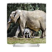 Baby Steps Shower Curtain