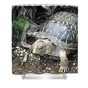 Baby Tortoise Shower Curtain