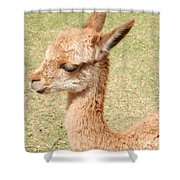 Baby Vicuna Shower Curtain