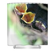 Baby Wrens In The Flowers 338 Shower Curtain