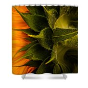 Back Angle Of Sunflower Shower Curtain
