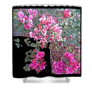 Back Door Bougainvillea Shower Curtain by Eikoni Images