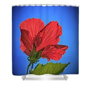 Back Lighting The Red Hibiscus  Shower Curtain